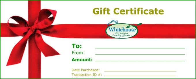 gift certificate for any occasion