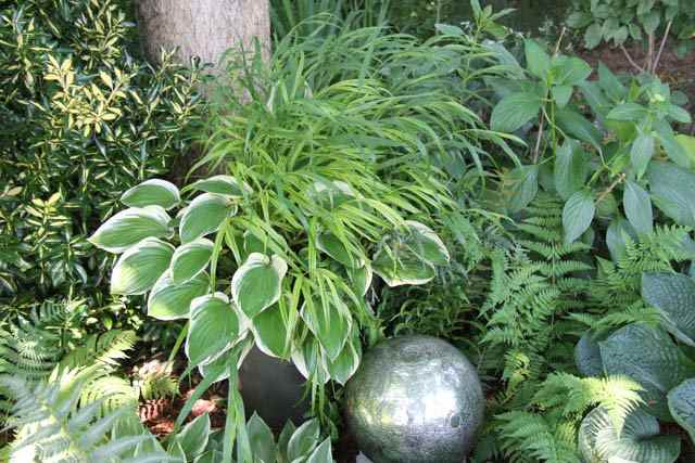 image of hosta and grass container
