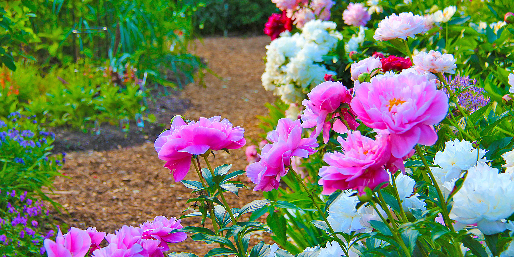 3-home-slider-peonies