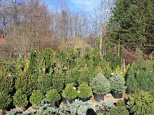 Check out this-beautiful selection of conifers all chosen-for-their outstanding performance in our area