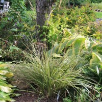 Calamagrostis 'Eldorado' in Whitehouse Perennials Display Gardens