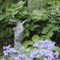 Polygonatum commutatum photo at Whitehouse Nursery and Display Gardens